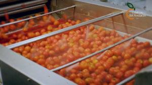 pureagroh2o tomatoes